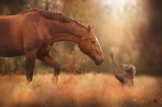 I found this picture and absolutely love it!  I love dogs and horses and this picture just captured it all!