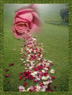 path of petals Beautiful Rose Flowers, Love Rose, Pink Flowers, World Gif, Goeie More, Picture Comments, Rose Images, Good Morning Good Night, Morning Greeting