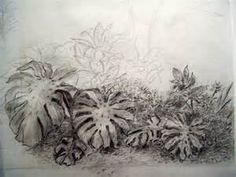 plant drawing studies - Bing Images Draw Realistic, Bush Plant, Drawing Studies, Plant Drawing, Drawing Sketches, Sketching, Tapestry, Plants, Bing Images