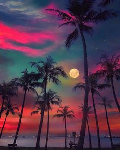 Post with 1975 votes and 103375 views. Tagged with nature, awesome, moon, singapore, palm trees; Beautiful Nature Wallpaper, Beautiful Moon, Beautiful Landscapes, Beautiful World, Beautiful Hotels, Amazing Wallpaper, Beautiful Scenery, Beautiful Beaches, Summer Wallpaper