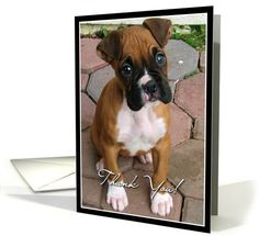 Thank You Boxer Puppy card  #greeting #thank #you #cards #dog #puppy #boxer #boxers