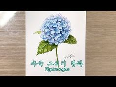 (Full) How to draw a Hydrangea 수국 그리기 강좌 - watercolor 배그림 Hydrangea, Watercolor, Drawings, Videos, Youtube, Pen And Wash, Shop Signs, Watercolor Painting, Hydrangeas