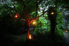 21st Birthday Party | party decor | lighting | candlelight lanterns in the trees