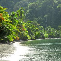 Rainforest Retreat at Playa Nicuesa Rainforest Lodge: Costa Rica