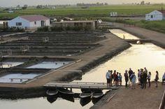 Una escapada al delta del Ebro con visita a MónNatura Delta y parada para comer en Temps de Terra. ¡Un finde redondo!