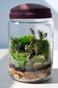 Moss terrarium by Pink Serissa