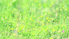 "AKIHITO OCHI ""HARU"" Music Video by DRAWING AND MANUAL. 越智章仁 「春」"