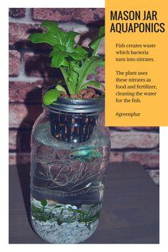 3 Mason Jar Aquaponics Kit Organic Sustainable Fish Hydroponics Herb Garden Without Jars
