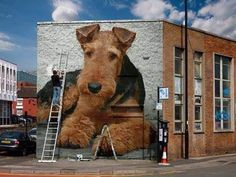Uplifting So You Want A American Pit Bull Terrier Ideas. Fabulous So You Want A American Pit Bull Terrier Ideas. Murals Street Art, 3d Street Art, Street Art Graffiti, Airedale Terrier, Irish Terrier, Pitbull Terrier, Malamute, Wire Fox Terrier, Fox Terriers