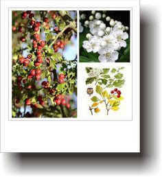 Plante medicinale – PĂDUCELUL Michael Fassbender, Beauty, Plant, Life, Beauty Illustration