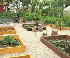 Cesars trädgårdsblogg: Vår nya köksträdgård