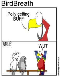Polly getting buff   https://www.facebook.com/BirdBreath/photos/a.441782030881.246441.87060505881/10152722078335882/?type=1&theater