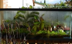 Brokken's Mini-bogs (Picture Intensive!) | International Carnivorous Plant Society