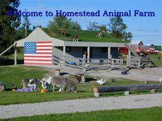 Homestead Animal Farm - Family Fun, Corn Maze, Pumpkins, School & Group Tours, Miniature (Mini) Animals, Farm Fresh Eggs