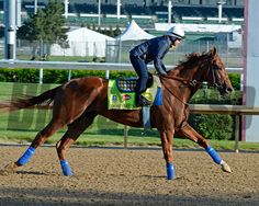 Horses on the track at Churchill Downs on Sun. April 28, 2015, in Louisville, Ky., in preparation for the Kentucky Derby and Kentucky Oaks.