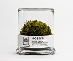 Mosser Terrarium || The Mosser is a small glass terrarium filled with a simple round moss ball. CLICK IMAGE FOR MORE