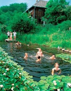 Going Offgrid: Natural Swimming ponds.