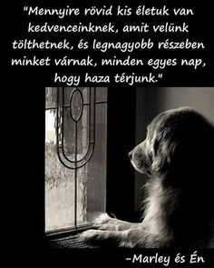 Sajnos, igen Dog Quotes Love, I Miss You, Animals And Pets, Animal Rescue, Cute Dogs, Quotations, Motivational Quotes, Poems, Best Friends
