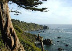 ... at Patrick's Point SP, Humboldt County, California. In my head, I can smell the combination of ocean air and redwood trees.