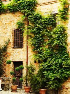 Spoleto, stone home covered in vines.