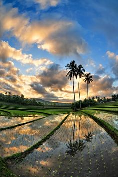 Sunrise at Ricefield Bali, Indonèsia - by DiBe