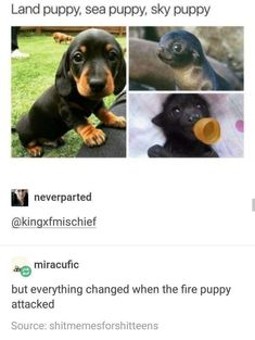 Hahaha only the avatar, master of all four puppies, could stop them..
