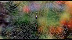 Hämähäkinseitti, kuvaaja Jalle Rajala