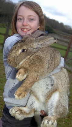 Image detail for -biggest bunny