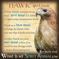Hawk Spirit Animal, Spirit Animal Totem, Animal Spirit Guides, Your Spirit Animal, Animal Symbolism, Native American Animal Symbols, Native American Quotes, Native Quotes, Bird Tattoos