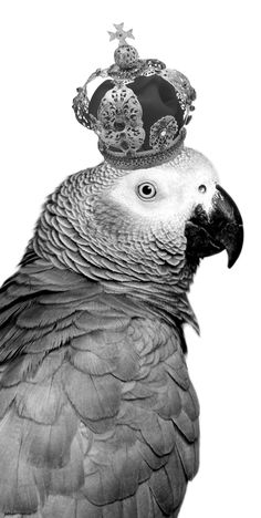 Great site, very specific to African Grey's