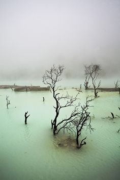 Kawah Putih (English: White Crater), West Java, Indonesia