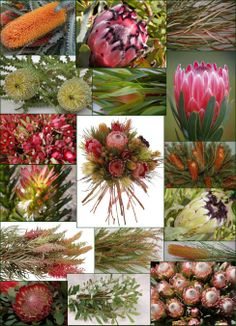 1000 Images About Floral Collages On Pinterest