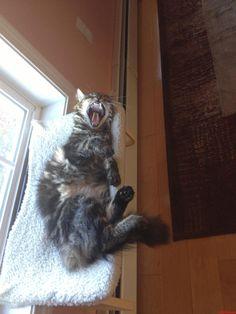 Let Me Sleep - http://cutecatshq.com/cats/let-me-sleep/