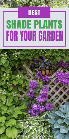GREAT list of plants to grow in shade with lots of different perennials and shrubs for growing outdoors in your garden. It really helped me pick plants for the flower beds in my backyard. #fromhousetohome #gardening #gardenideas #shade #plants #shadeplants Partial Shade Perennials, Shade Flowers Perennial, Shade Loving Shrubs, Shade Shrubs, Flowers Perennials, Plants Under Trees, Full Sun Plants, Best Plants For Shade, Cool Plants