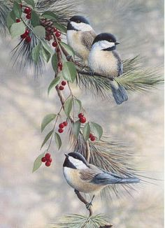 Chickadees with their cute little tune they sing so often....