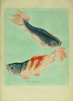 Histoire naturelle des dorades de la Chine  Paris :[s.n.],1780.  www.biodiversitylibrary.org/item/30058