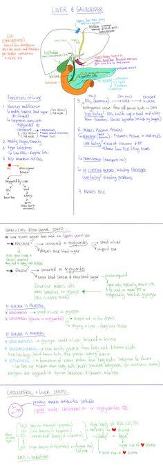 Liver Functions. Stabilizing Blood Sugar. Cholesterol.
