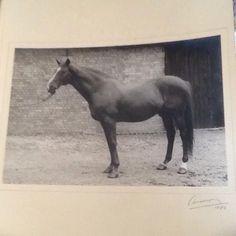 Blue Peter, Horses, Animals, Animales, Animaux, Animais, Horse, Words, Animal