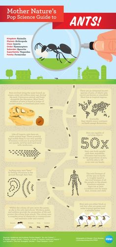 #INFOgraphic > All About Ants: Most of the insects look and feel disgusting for most of us. Ants likely belong to a most tolerable breed either cause we feel more familiar or due their tiny size. However, ants carry tremendous body power and impressive physical abilities disproportional to their size. Read about their traits.  > http://infographicsmania.com/all-about-ants/