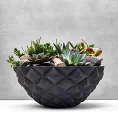 """Looking for succulent plant gifts online in Dubai, UAE? Add a little flare to indoors with our exclusive plants available online and delivery is available across the UAE"" Planting Succulents, Planting Flowers, Gifts Dubai, Indoor Plants Online, Landscape Solutions, Sustainable Gifts, Garden Gifts, Greenery, Orchids"