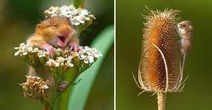 teeny tiny little wild mice