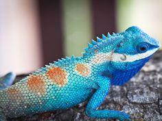 Östliche Smaragdeidechse: Ein Reptil, so hübsch wie sein Name – Bild: Shutterstock / defpicture    www.einfachtierisch.de