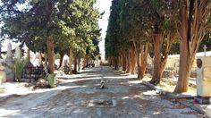 cimitero dei Rotoli | lapidi al centro del viale
