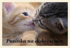 Animals, animals kissing, small animals, kittens and puppies, baby kittens Kittens And Puppies, Cute Cats And Kittens, I Love Cats, Crazy Cats, Kittens Cutest, Pretty Cats, Beautiful Cats, Animals Beautiful, Cute Baby Animals
