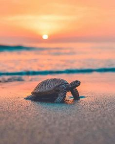 photography underwater animals \ photography underwater & photography underwater people & photography underwater animals & photography underwater under the sea Baby Animals Super Cute, Cute Little Animals, Cute Funny Animals, Baby Sea Turtles, Cute Turtles, Turtle Baby, Turtle Love, Baby Animals Pictures, Cute Animal Pictures