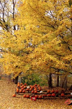 Pick your pumpkin.