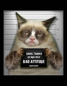 Grumpy Cat Bad Cattitude conning your way. Everything Else will be Positive Grumpy Cat From Pin Board Funny Grumpy Cat Memes, Funny Cats, Funny Animals, Cute Animals, Grumpy Cats, Funniest Animals, Baby Animals, Siamese Cats, Cats And Kittens