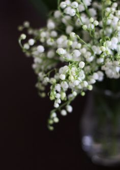 Lily of the Valley - my most favorite smell ever