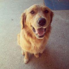 #mydog #dog