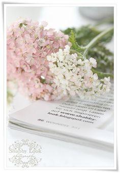 Hortensia Hydrangea, Pink Hydrangea, Hydrangeas, Simply Beautiful, Beautiful Flowers, Shabby Look, Dark Pictures, Pastel Shades, Pretty Pastel